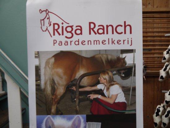 Nieuwveen Riga Ranch