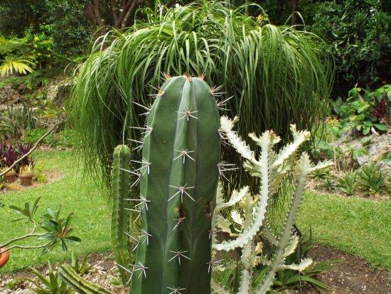 Bathsheba, Barbados: Andromena Botanical Gardens