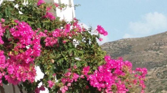 Platis Gialos, Grekland: Platys Gialos