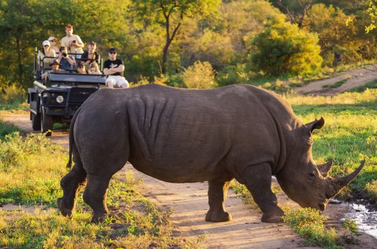 Pretoria, South Africa: Game drive on a tour with Rhino.