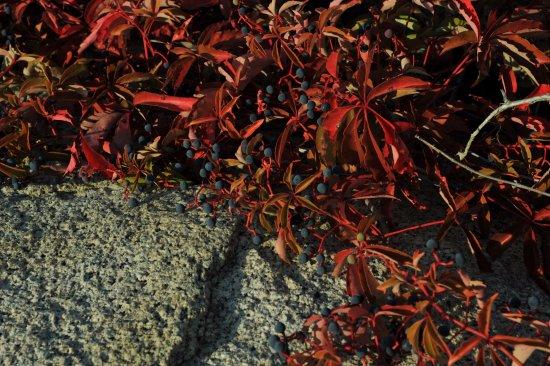 Rockport, Μασαχουσέτη: wild plant