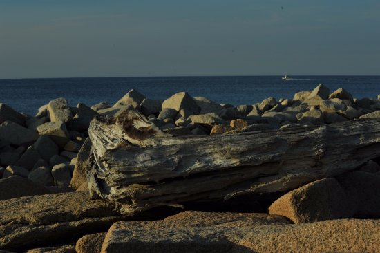 Rockport, MA: driftwood