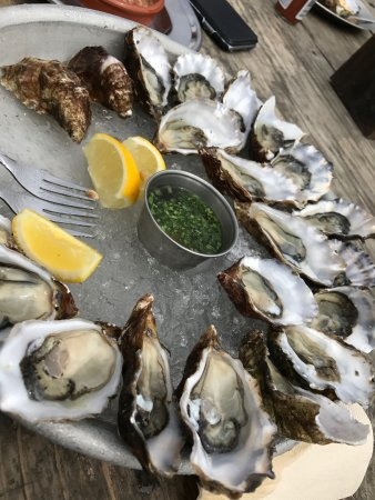 Marshall, CA: Oysters