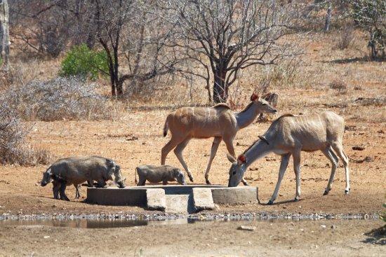 Senalala Luxury Safari Camp Photo