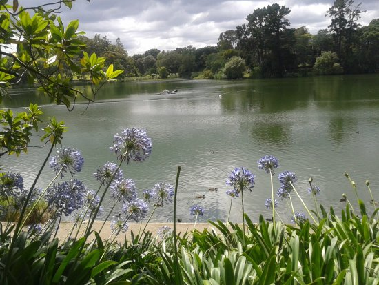 Whanganui, Nya Zeeland: Agapanthus overlooking the lake,,,