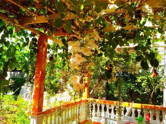 Alejandro and Susana House: Il patio dove si fa colazione