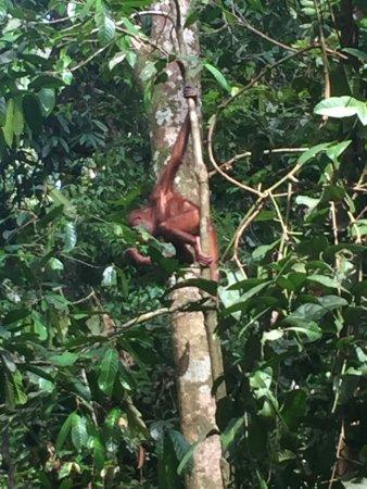 Sepilok, Malezya: photo1.jpg