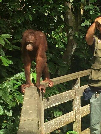 Sepilok, Malezya: photo2.jpg