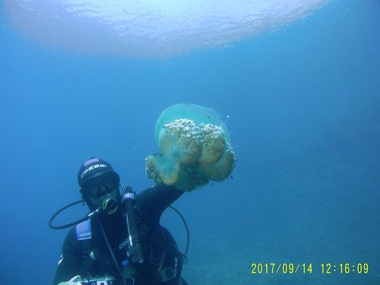 Platanias, กรีซ: Here jelly jelly