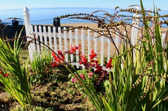 Sea Cliff Gardens Bed & Breakfast: Bill's Gardens