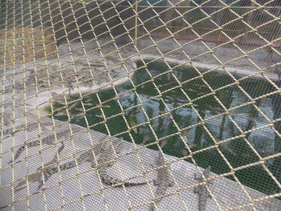 Davao City, Filipiny: Baby Crocs