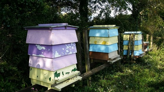 Helston, UK: Bee Hives