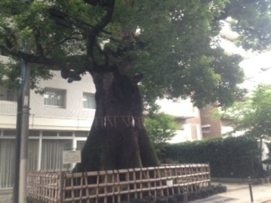 都会の真ん中に堂々とした木