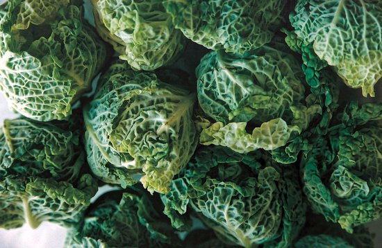 Savoy Cabbages