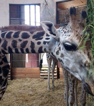 Budapest Zoo & Botanical Garden: Tea time.