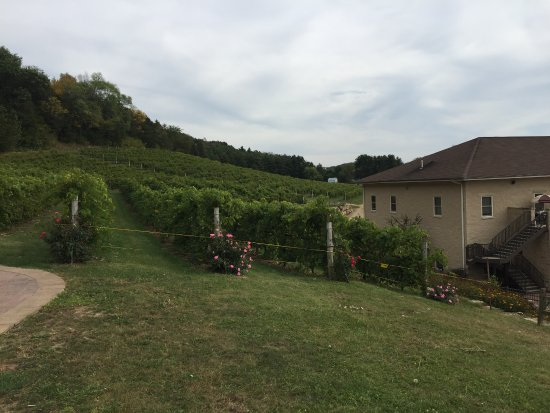 Prairie du Sac, WI: Vineyard View