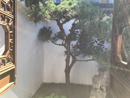 portland japanese garden small japanese tree - Small Japanese Garden