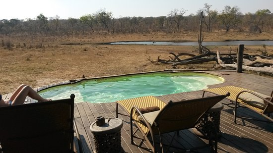 Hwange, Zimbabue: A view of the watering hole from the pool.