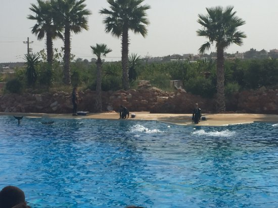 Spata, Grecja: Στις 11.00 το πρωί ,show με τα δελφίνια