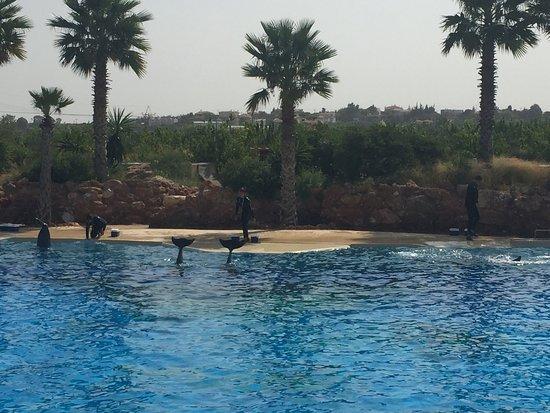 Spata, Grecja: Το show με δελφίνια,αξίζει και ειναι δωρεάν