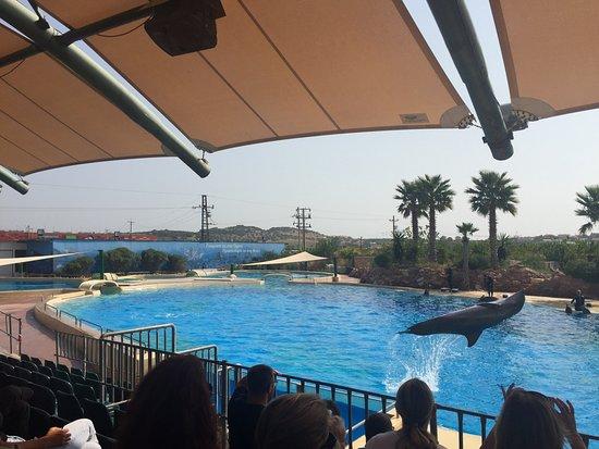 Spata, Grecia: Το show με δελφίνια,αξίζει και ειναι δωρεάν