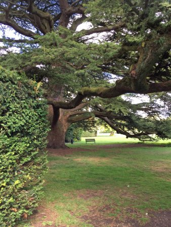 Cirencester, UK: Old tree Abbey Grounds