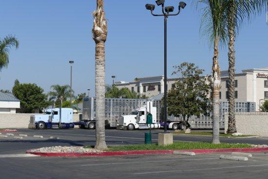 Tulare, Kalifornia: pig trucks