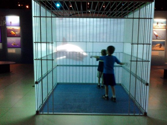 National Geographic Museum: In the shark cage simulation