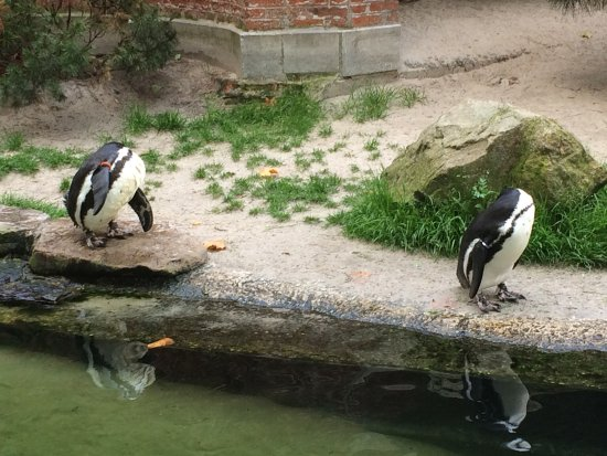 Antwerp Zoo (Dierentuin) : photo1.jpg