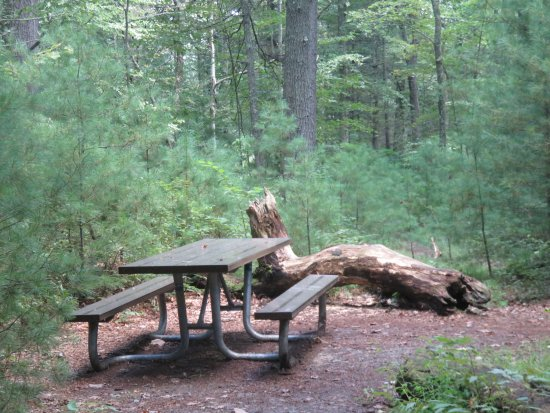 Dingmans Ferry, Pensilvanya: Picnic benches