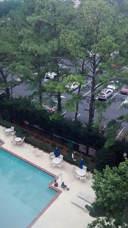DoubleTree by Hilton Hotel Atlanta Airport: Pines around the pool area...