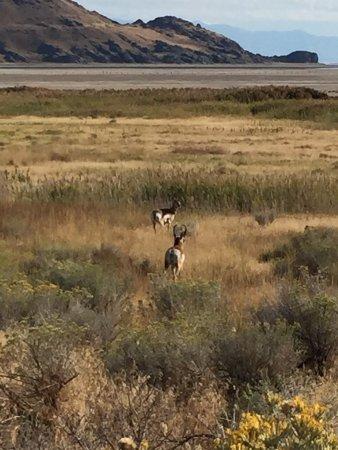 Antelope Island State Park: photo8.jpg