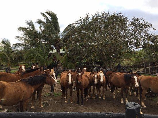Cabanas Pikera Uri: horses in the paddock each morning