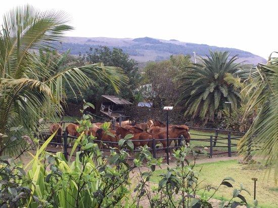 Cabanas Pikera Uri: View of the paddock from our veranda