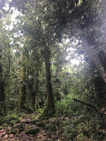 Volcan Baru National Park: photo1.jpg