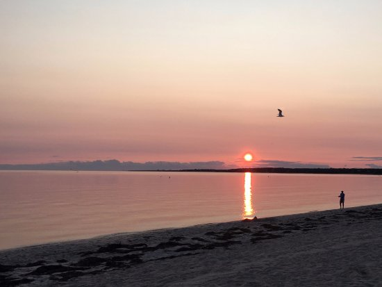 Chatham, MA: Harding Beach sunset. After many sunset photos, lucky to get one with a bird!