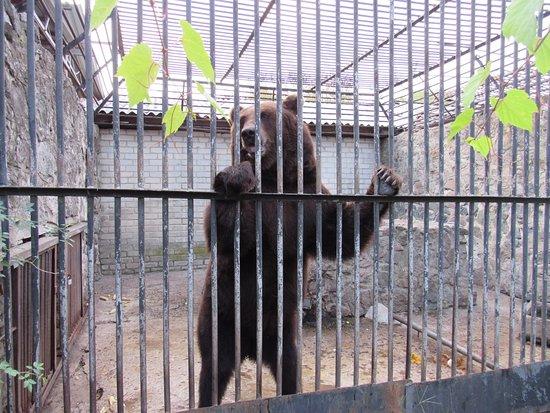 Cherkasy Zoo: Скучно ему