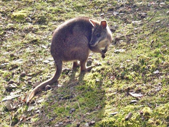 Im Tierpark Herborn
