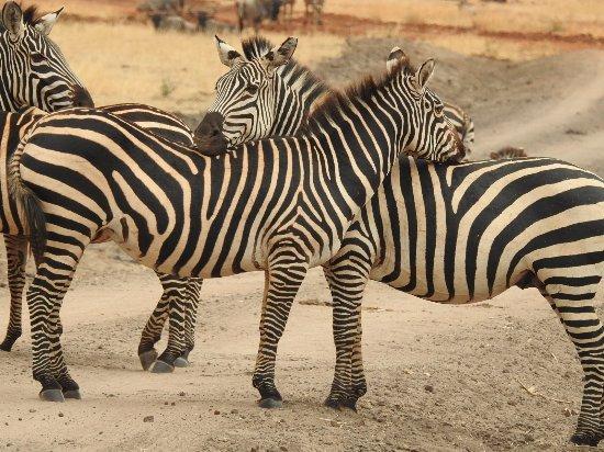 Foto Arusha Region