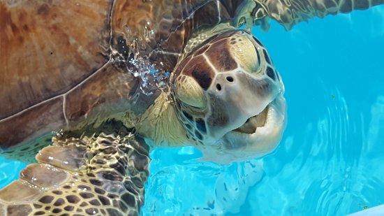 The Turtle Hospital : 20170626_093557_large.jpg