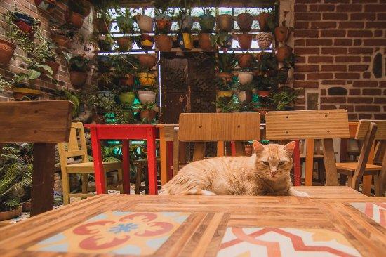 Dulces del jardin restaurant reviews phone number for Alejar gatos del jardin