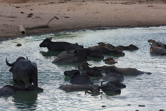 Uda Walawe National Park, Sri Lanka: Not just elephants