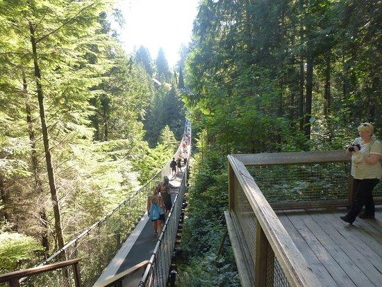 North Vancouver, Kanada: Walking on the bridge is fun