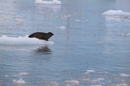 Valdez, AK: photo3.jpg