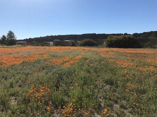 Clanwilliam, South Africa: photo1.jpg