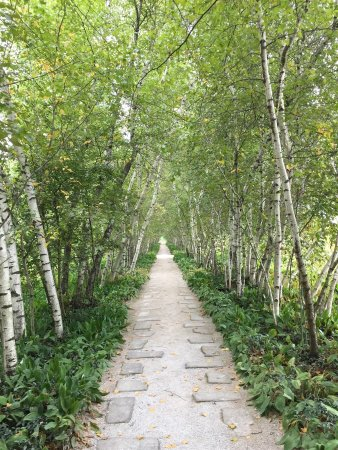 Έικρον, Οχάιο: Row of birch trees at Stan Hywet gardens