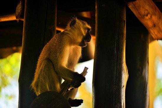 Skukuza, Sydafrika: Visita que se roba los azucares del desayuno