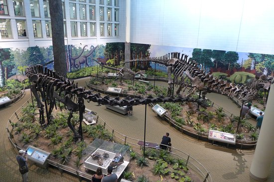 Carnegie Museum of Natural History: Dinosaurs
