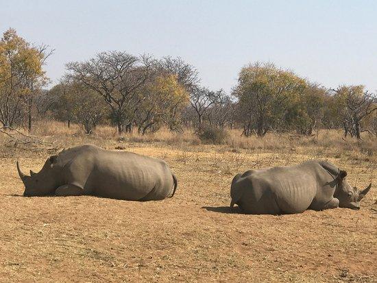 Welgevonden Game Reserve, Afrika Selatan: Jamila Game Lodge cc