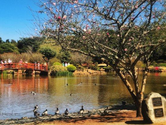 Toowoomba, Australia: photo0.jpg